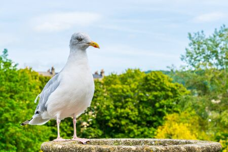 white bird with tree. and sky background