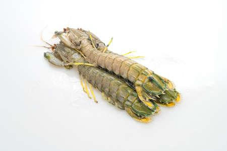 fresh mantis shrimp isolated on white background