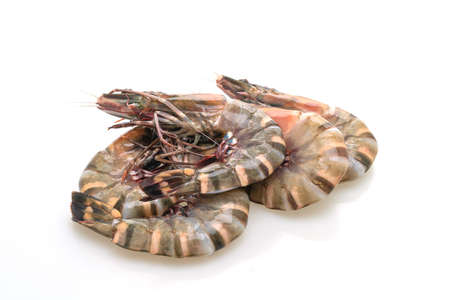 fresh tiger prawn or shrimp isolated on white background