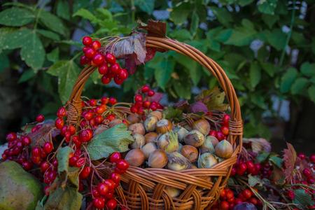 harvest basket: Autumn still life, harvest basket Stock Photo