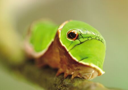 Close-up of a caterpillar on a branch photo