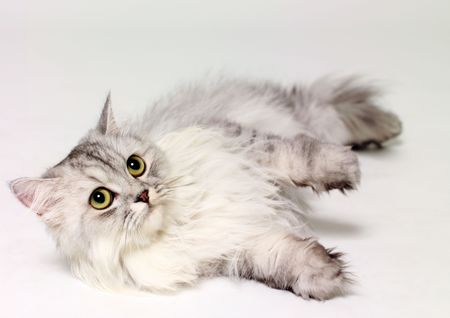 Close-up of a cat lying down Stock Photo - 2225673