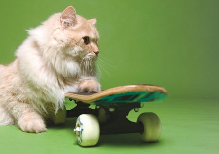 Close-up of a cat on a skateboard