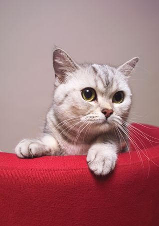 Close-up of a cat on the back of a couch