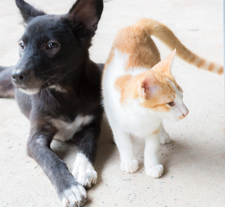close together: Cat and Dog