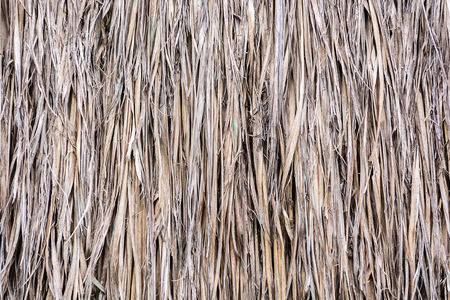 thatch: thatch roof background