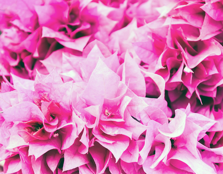 mulberry paper: Pink Bougainvillea flowers. Vintage Color Style.