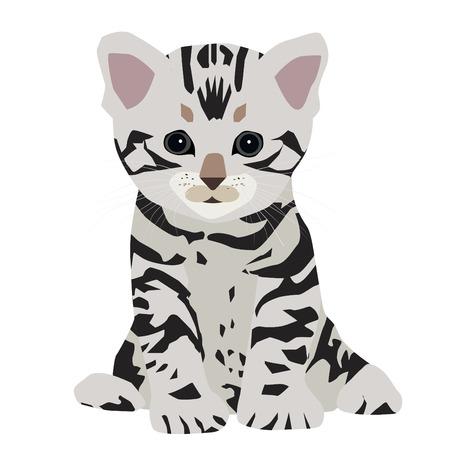 pampered: Cute American shorthair cat kitten. Vector illustration.