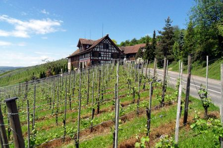 Stunning Vineyard on Swiss Hillside with Farmhouse in background Stock Photo - 5409625