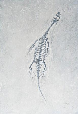 Small Dino fossil Stock Photo