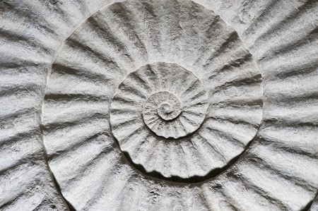 Fossil of shell