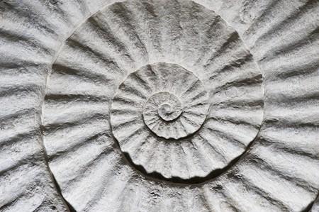 Fossiles de la coquille