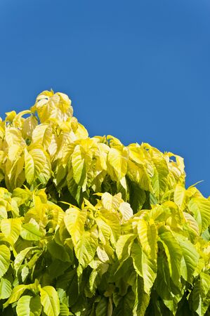 leaves isolated on blue sky