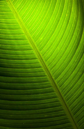 texture of green leaf Stock Photo
