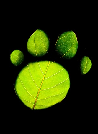 Animal footprint on green leaf isolated on black background Stock Photo