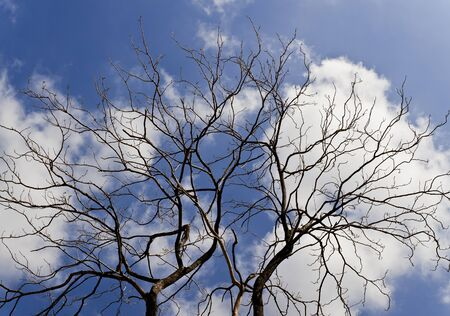 dry tree isolated on blue sky Stock Photo