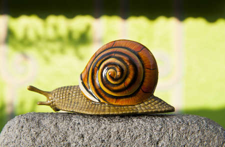 Lonely snail crawls along the cement path isolated on green wall Stock Photo