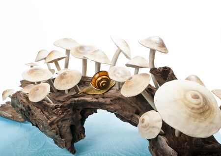 Long rechoncho con un grupo de hongos Foto de archivo