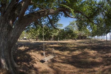 old swing hanging on big tamarind tree Stock Photo - 17364968