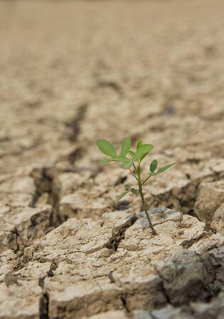One small green tree in drought land Stock Photo - 18289022