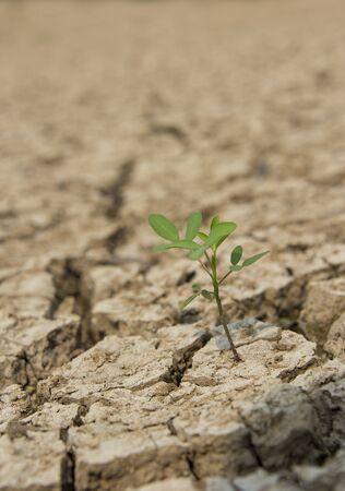 Un peque�o �rbol verde en la tierra de la sequ�a