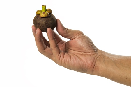 one hand hold one fresh mangosteen isolated on white background Stock Photo - 19835420