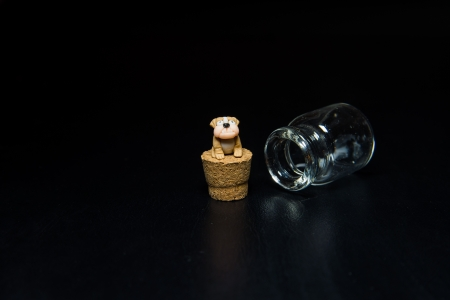 Bulldog sit on cork isolated on black background photo