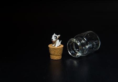 Miniature Bull terrier sit on cork isolated on black background Stock Photo - 22013032