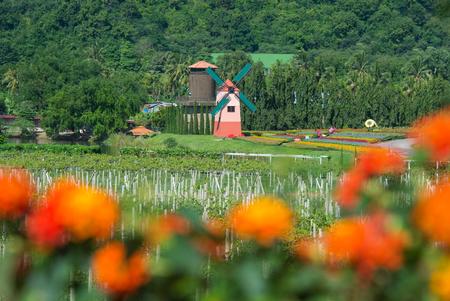 Turbina de viento y vi�edo con naranja primer plano desenfoque flor