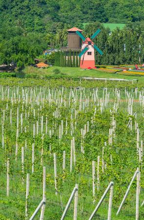 Patio de la uva con el colorido de la turbina de viento Foto de archivo