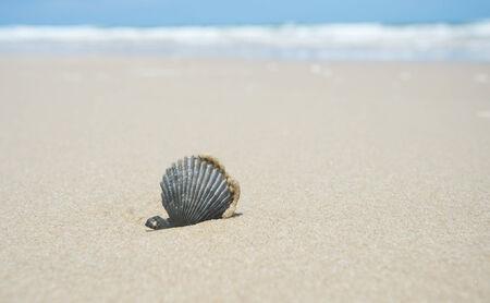 una concha marina negro sobre la arena