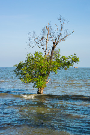 Lonely tree in the sea Stock Photo