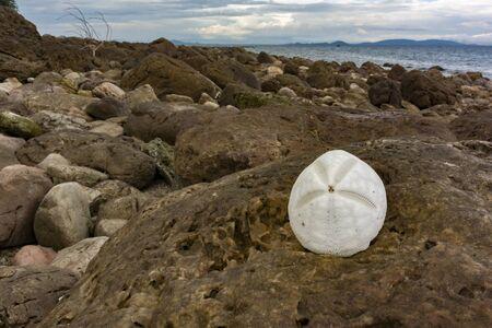 White seashell on the rock Stock Photo