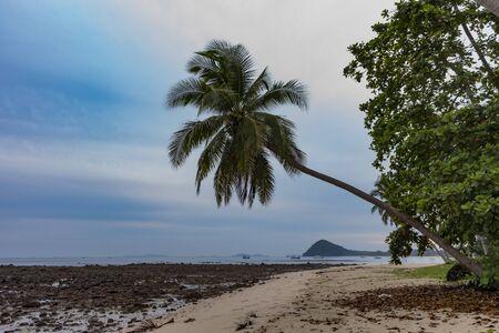 One palm tree near rock beach