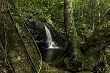 Waterfall with large tree Stock Photo