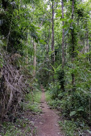 Path along the forest in Thailand Stock Photo