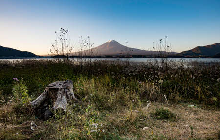 Stump in the grass with Fuji Mountain background Stock Photo