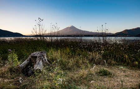 Stump in the grass with Fuji Mountain background Foto de archivo