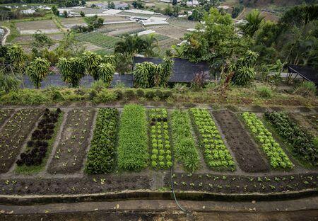 Small vegetable garden on the mountain Stock Photo