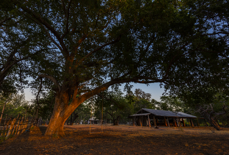 Big tree in the camp Stock Photo