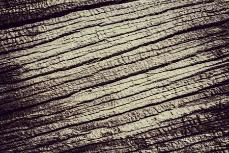 Hi light on tree bark background texture