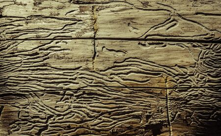 Dead wood with termite path
