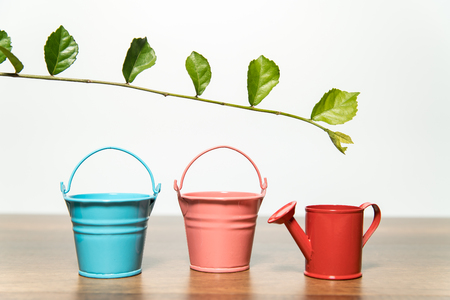 Three buckets of water and green leaf Stock Photo