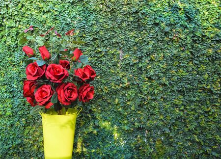 climbing fig: Red rose bouquet on green climbing fig background for valentine day