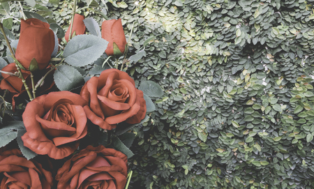 climbing fig: Vintage red rose bouquet with climbing fig background