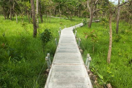 Footpath in National park,Northeast of Thailand   photo