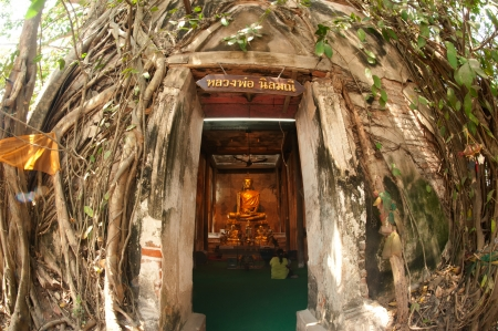 Old root tree around ancient church in temple ,Middle of Thailand  photo