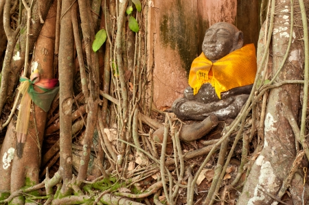Root tree around monk statue  photo