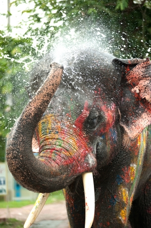 Young elephant playing water in Songkran day in Thailand  Standard-Bild