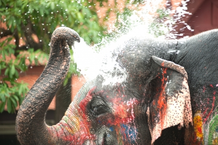 Young elephant playing water in Songkran day in Thailand  Stock Photo